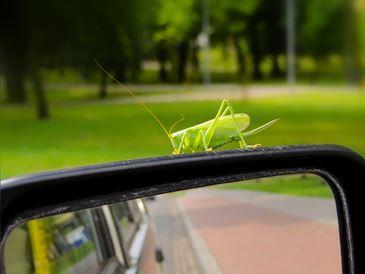 Jak usunąć owady z karoserii auta? Sprawdzone rozwiązania